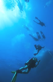 Habitat Curacao Diving